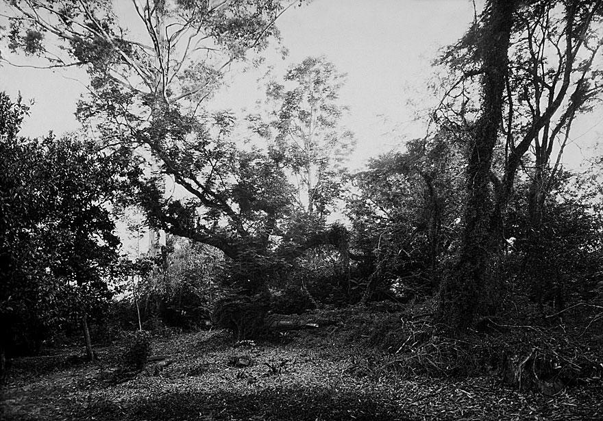 Mae`s Garden 1 | 100 x 130cm | Südafrika 2001