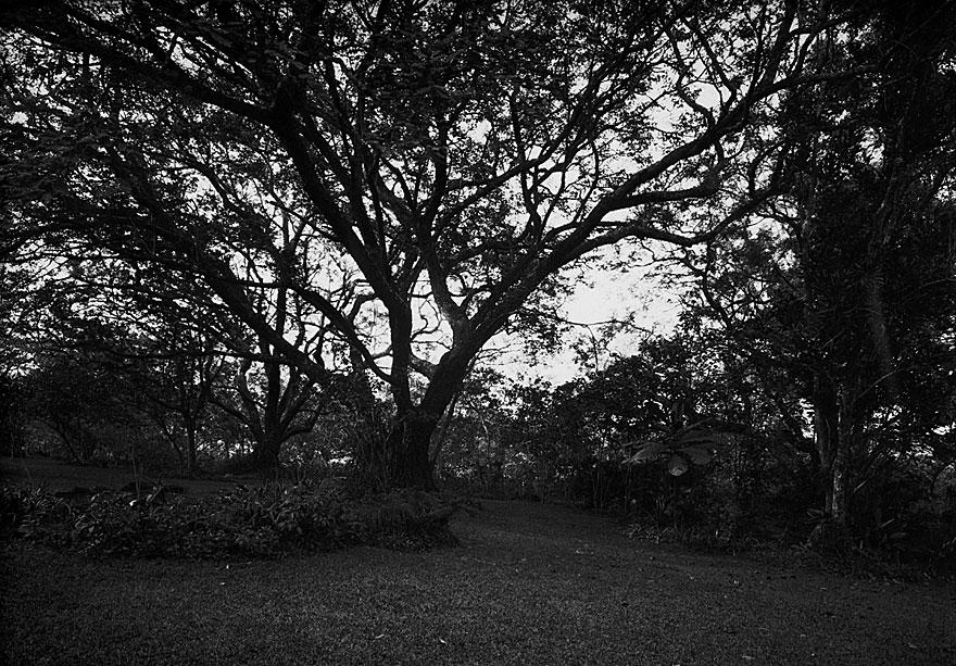 Mae`s Garden 3 | 100 x 130cm | Südafrika 2001