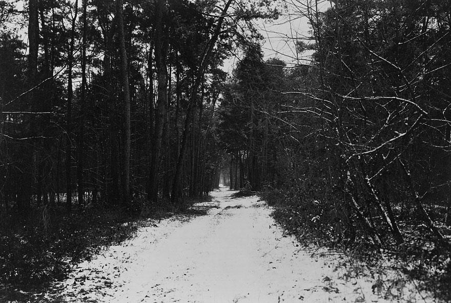 Wald 1 | 100 x 130cm | Deutschland 2012