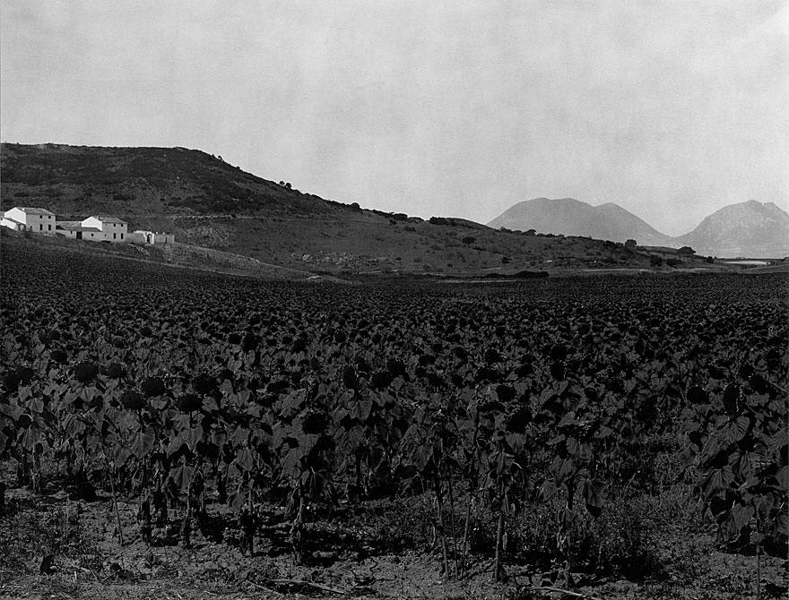 Farm Andalusien 5 | 100 x 130cm | Spanien1998