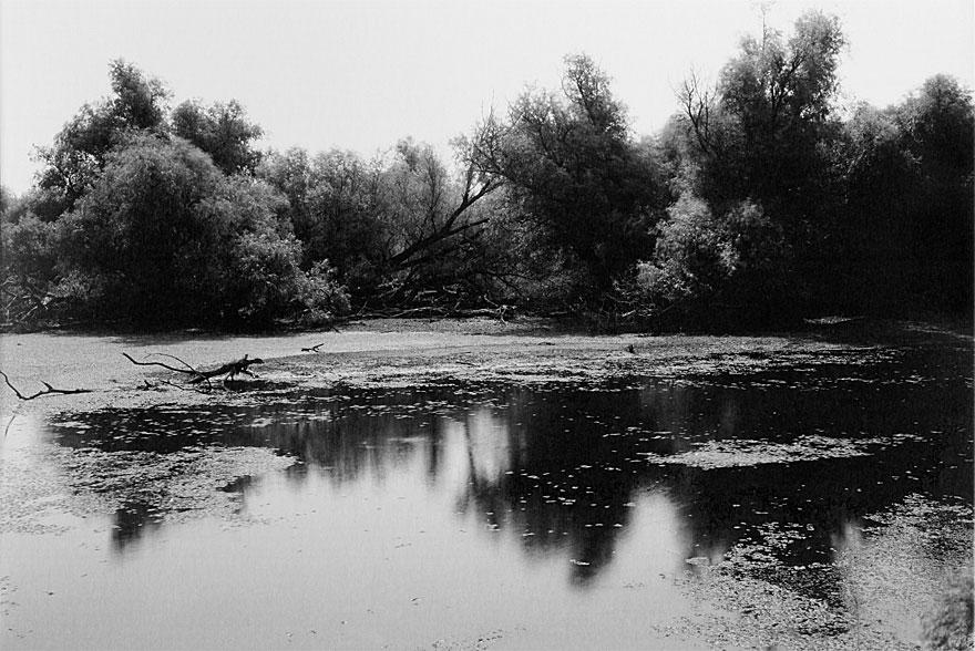 Donaudelta 3 | 100 x 130cm | Romania, 2013