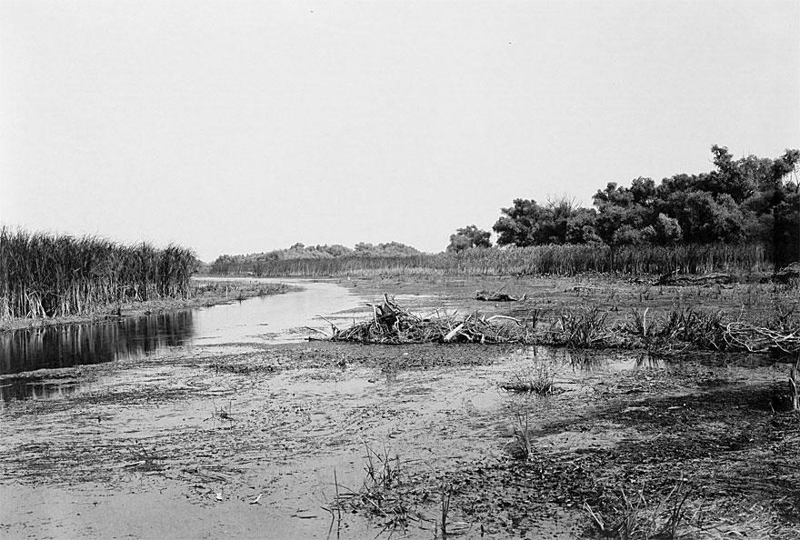 Donaudelta 2 | 100 x 130cm | Romania, 2013