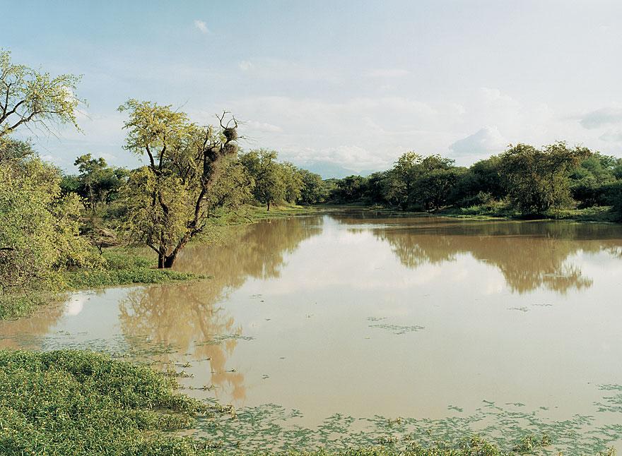 Pool | 130 x 160 cm | Timbavati 2001