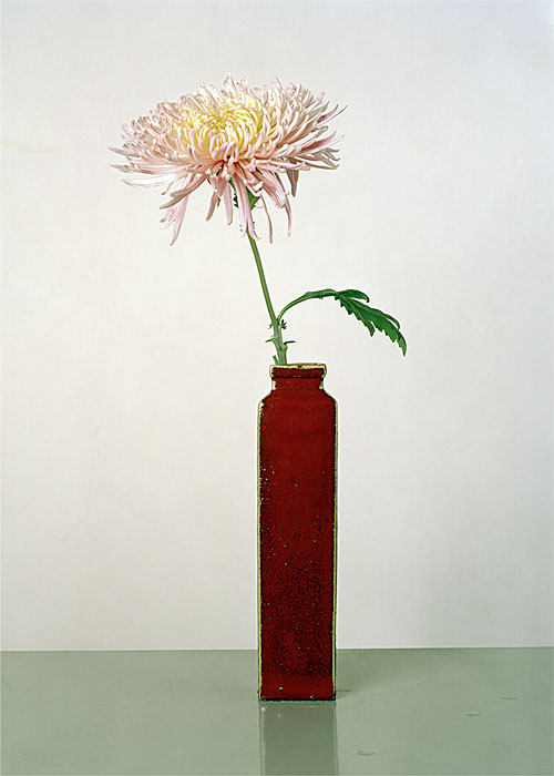 Flowers 4 | Aster | 160 x 120 cm | 2007