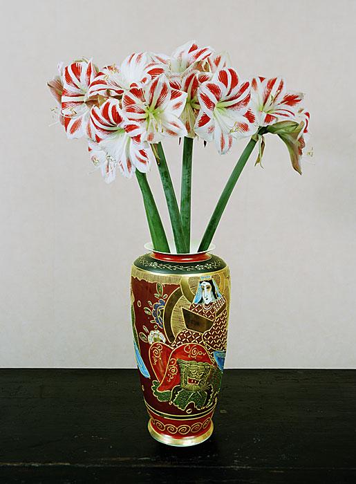 Flowers 9 | Amaryllis | 160 x 120 cm | 2006