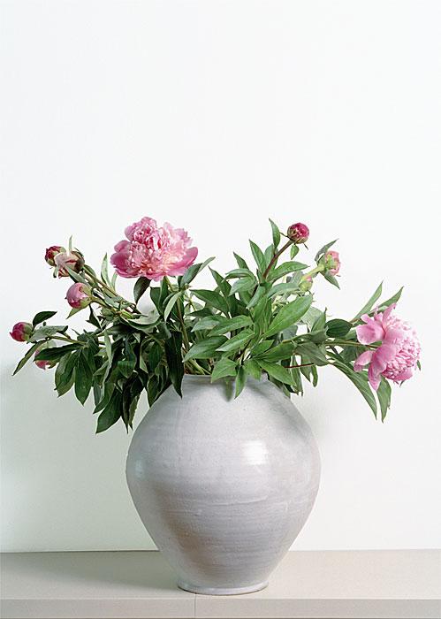 Flowers 11 | Pfingstrosen | 160 x 120 cm | 1993