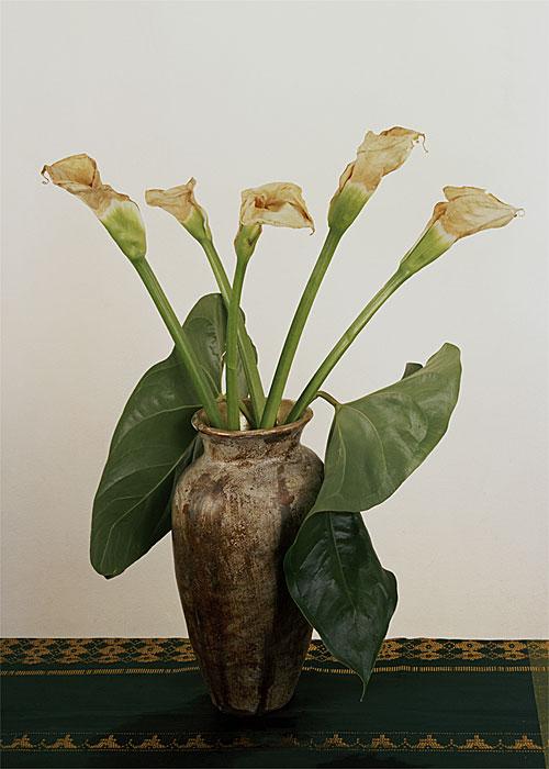 Flowers 13 | Calas | 160 x 120 cm | 1997