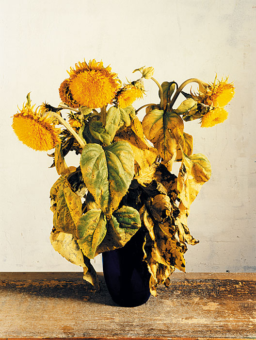 Flowers 14 | Sonnenblumen | 240 x 180 cm | 1997