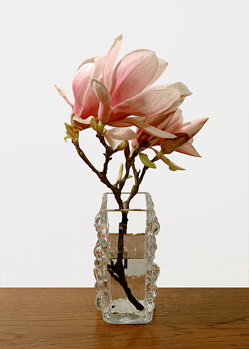 Flowers 17 | Magnolien | 240 x 180 cm | 1999