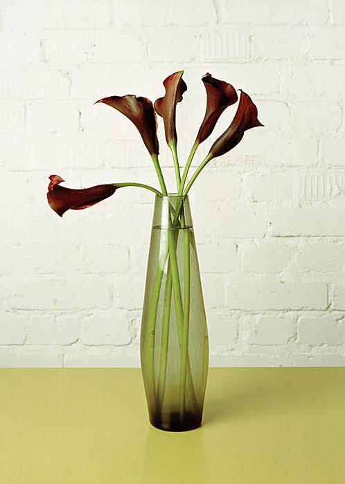 Flowers 1 | Calas | 240 x 180 cm | 2008