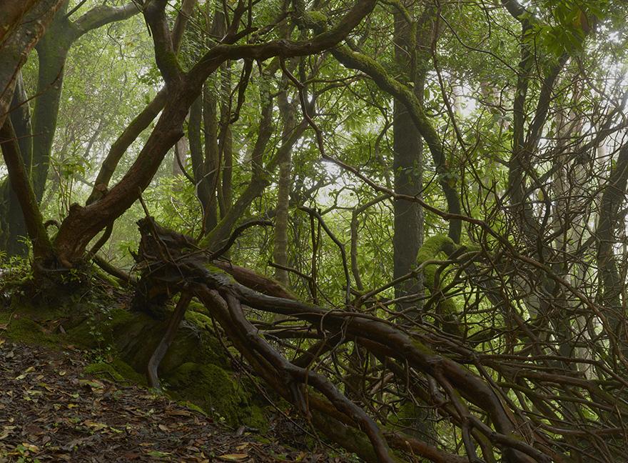 Geraldines Garden 1 | 120x160 | Irland 2012