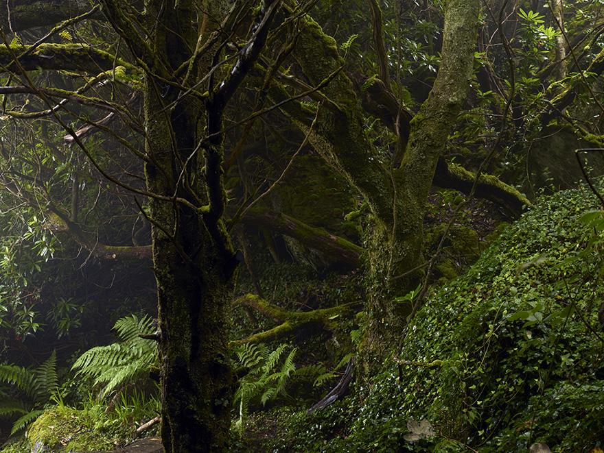Geraldines Garden 2 | 120x160 | Irland 2012