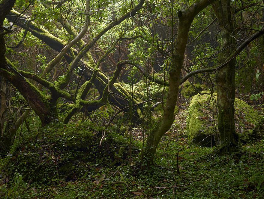 Geraldines Garden 3 | 120x160 | Irland 2012