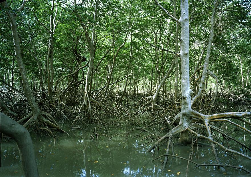 Mangroven | 120x160 | Brasilien 2010