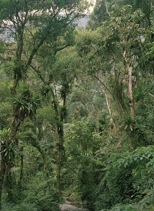 Urwald | 230x190 | Brasilien 2000